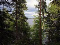 Выборг, парк Монрепо, вид сквозь деревья на бухту - panoramio.jpg