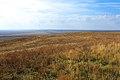 В окрестностях села Шкуновка - panoramio.jpg
