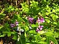 Гора Ореховая, шмель на цветах.jpg