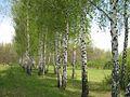 Дендрологічний парк 393.jpg
