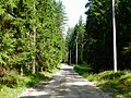 Лесная дорожка - panoramio (10).jpg