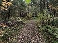 Лесные дорожки к Акуловскому 3.jpg