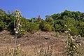 Погляд на парк від Бугу (Сутиски) P1150046.jpg