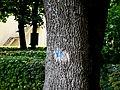 Понумеровані дерева у немирівському парку P1080890.jpg