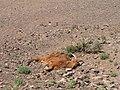 Під час експедиції з будь-якої точки видно від 1 до 8 тварин, що загинули.jpg