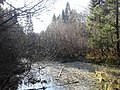 Река Любосеевка в районе бывшей запруды к северу от Фрязино.jpg