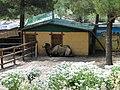 Сафари-парк. Верблюд - panoramio.jpg