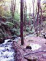 Смоларски водопад 6.jpg