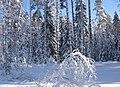 Снежное кружево. - panoramio.jpg