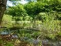 Сфагнове озеро, Чорний ліс.jpg