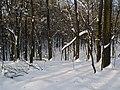 Украина, Киев - Голосеевский лес 20.jpg