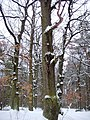 Чернечий Ліс 25.jpg