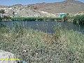 بحيرة حمام ورقة في ولايةالنعامة الجزائر.jpg