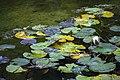 گیاهان در پاییز - باغ بوتانیکال تفلیس 20.jpg