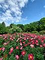 つくば牡丹園photo1.jpg