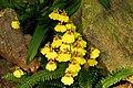 华南植物园,兰圃中的兰花a - panoramio.jpg