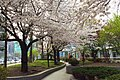 札幌第1合同庁舎 - panoramio.jpg