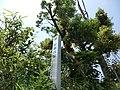 根郷貝塚 - panoramio.jpg