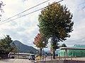 美並デイサービスセンター裏の木 - panoramio.jpg