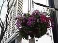 街路に吊られた花 (7026254537).jpg