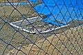 酒船石遺跡 亀形石造物 2000-05 - panoramio.jpg