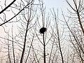 鳥巢 - panoramio (4).jpg