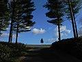 麓郷の空と樹(謙虚に慎ましく) - panoramio.jpg