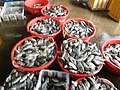 0325jf2016 Rehabilition of Panasahan City of Malolos Bulacan Fishportfvf 10.jpg