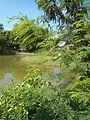 07920jfPampanga River banks Candelaria Welcome Calumpit Bulacan Roadsfvf 22.JPG