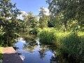 1277.Groningen.Grijpskerk.Nam.GasOpslag.Natuur.Park.NatuurPark.NoorderRiet.Natuurgebied.Kommerzeil.Planten.jpg