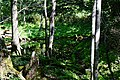 140829 Yonko of Shiretoko Goko Lakes Hokkaido Japan05n.jpg