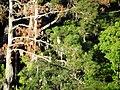 16 Egrets Bennetts Point RD Green Pond SC 6843 (12397424245).jpg