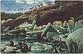 19071215 hamburg hagenbeck's tierpark nordland panorama.jpg
