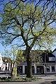 1 Stieleiche in Wedel (2018-04-21 Naturdenkmal lfd. Nr. 07-09 im Kreis Pinneberg).jpg