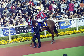 Still in Love (horse) Japanese-bred Thoroughbred racehorse