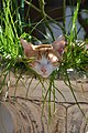 2012-09-03 Sleeping cat in Greece WiTi.jpg