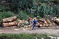 2014 Coa machada na madeira. O Rosal. Galiza.jpg
