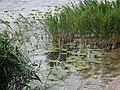 2015-05-21 Mantova, fiume Mincio 04.jpg