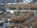 20150219 107 Wienerwaldsee (Large) (15961953033).jpg