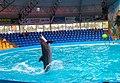 2017-05-16 Show in Kyiv Dolphinarium 09.jpg