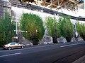 2D trees - panoramio.jpg