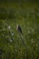 3. Πτηνό Κάρλας.png