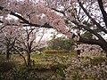 3 Chome-1 Meikeminami, Chūō-ku, Niigata-shi, Niigata-ken 950-0948, Japan - panoramio.jpg