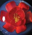 3d-Gelatine-Blume Freesie 2f.png