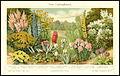4568 Mey6 Meyers Konversations-Lexikon 6. Auflage Neue Gartenpflanzen.jpg