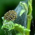 4c Spider ball (7518583514).jpg