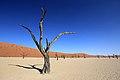 550 let staré stromy v Deadvlei - panoramio.jpg