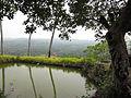 A-Pond-On-The-Way-To-Konaje-Kallu-Top-Moodbidri.JPG