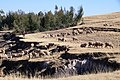 A Flock of Sheep - panoramio.jpg