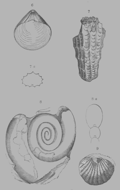 A Treatise on Geology, plate 3.png